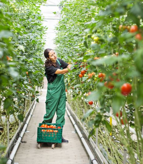 CDA Bladel: 'Is een belasting voor arbeidsmigranten fair?'