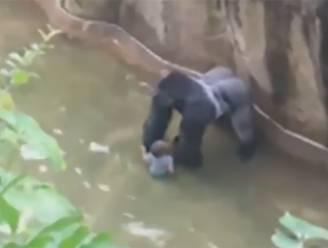 VIDEO: Kind gewond na val in gorillaverblijf, gorilla doodgeschoten