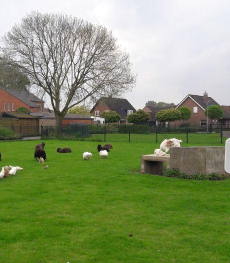Vos houdt huis in dierenweide Westdorpe