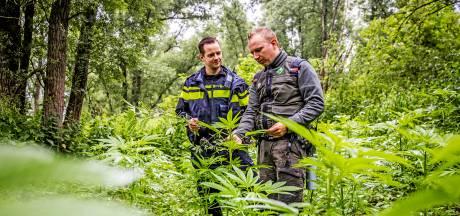 Hennepvelden in beschermd natuurgebied opgeruimd dankzij samenwerking tussen politie en boswachter