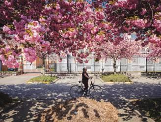Bloemenpracht in het Hageland: stap op de fiets en ontdek de mooiste bloesems met onze 8 tips