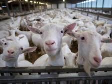 Nieuw onderzoek nodig in Gendts geitenconflict
