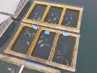 """Rusland beveelt vrijlating van orka's en witte dolfijnen uit """"walvisgevangenis"""""""