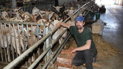 Puppy vergiftigd en dierenbeul aan het werk bij geitenboer: tv-worstjes met korrels en klop op kop