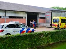 Koe verdrukt man tegen hek op boerderij in Deurne, slachtoffer raakt zwaargewond