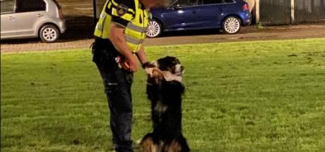 Politie vindt en vangt vrolijke Berner Sennenhond (die eerst echt nog even wilde spelen)