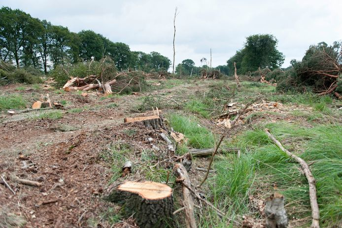 Omwonenden maken zich zorgen om de kap van vele bomen bij het Boetelerveld, bij Marienheem. Volgens Landschap Overijssel wordt het bos gekapt om er 'natte heide' te creëren.