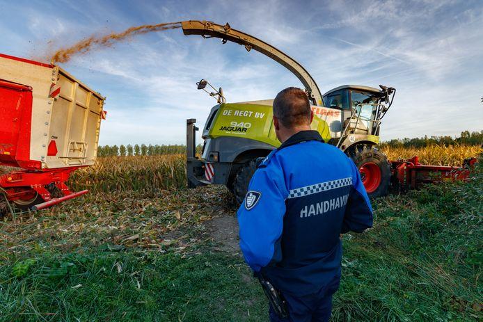 Zevenbergschen Hoek -Het veld is 'schoon': boer Wil de Regt kan eindelijk aan de slag met het oogsten van de mais.
