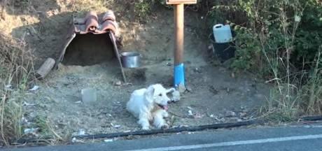 Depuis 18 mois, ce chien refuse de s'éloigner de l'endroit où son maître est mort