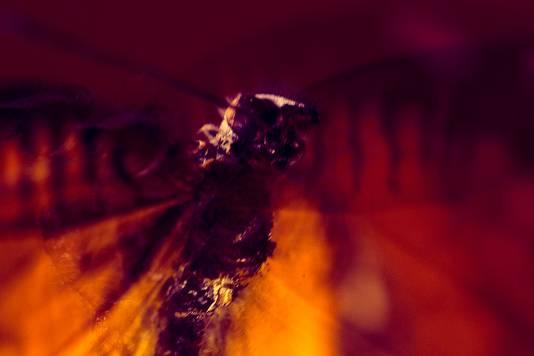 Deze foto draagt de naam van de fotoserie: 'Bevroren vleugels'.