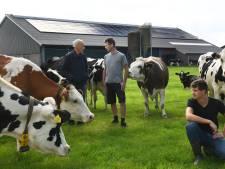 Oud-veearts: koeien en vogels maken in weilanden plaats voor zonnepanelen