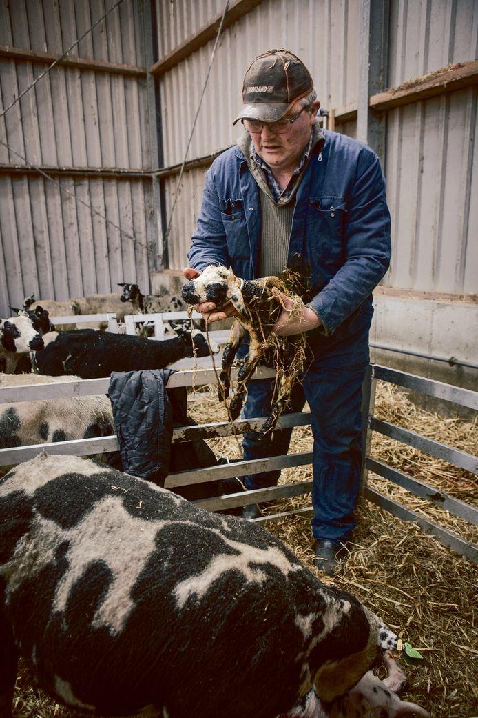 Nieuw leven op tweede paasdag, bij een kerklid dat een boerderij bestiert.