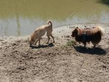 Negatief zwemadvies voor honden bij Hondenspeelpark Steekterpoort
