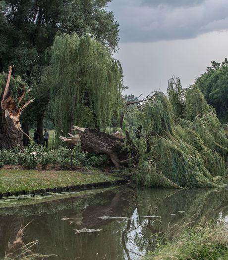 Tielse bomen vingen in juni veel wind; maar moeten ze nu gekapt worden?