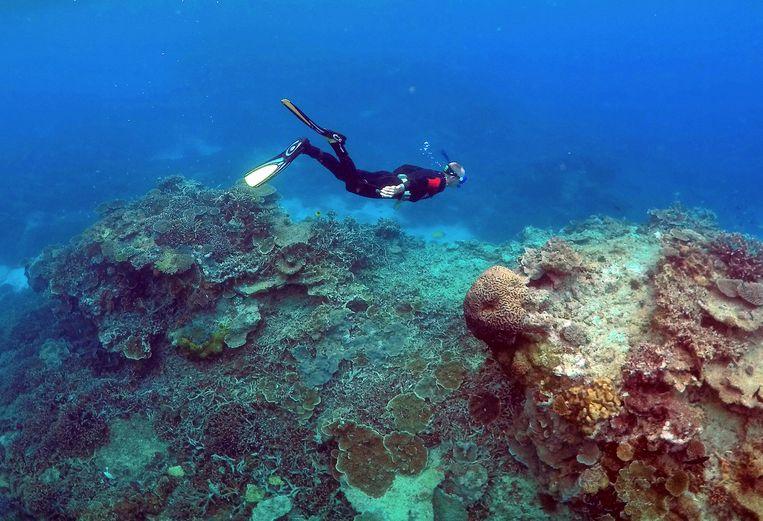 Een man snorkelt door het Groot Barrièrerif. Beeld REUTERS