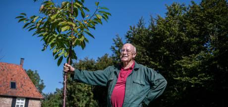 Goede start van levensbelang voor een boom: 'Controleer voor aankoop de wortels'
