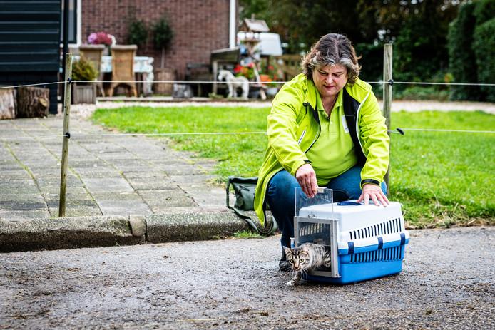 Dierenbeschermster Pat Buckley laat de 'geholpen' zwerfkat Tijgertje los.