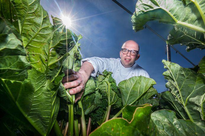 Piet Valstar, de chef-kok van Op Hodenpijl, in de moestuin bij zijn rabarberplanten.