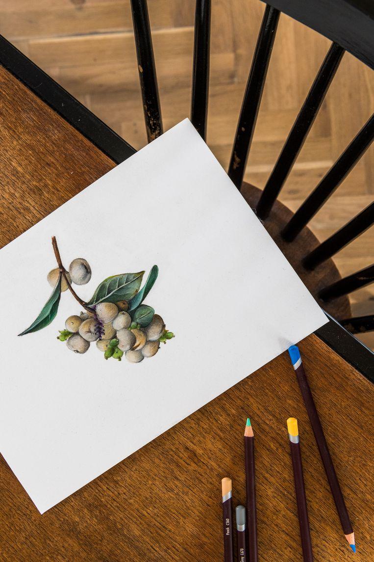 Deze illustratie is van Stefanie, die naast architect ook botanisch illustratrice is. Beeld Luc Roymans