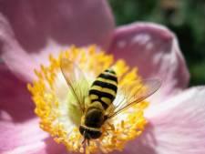 Sauvez une abeille, buvez un smoothie