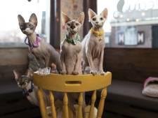 De 'E.T.'s' van het kattencafé in Hengelo zoeken voortdurend contact