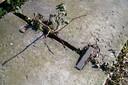Planten worden zo sterk dat ze zelfs zware betonnen blokken uit elkaar duwen.