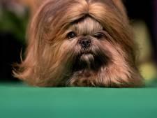 Verkiezing Mooiste Hond van Wierden barst los
