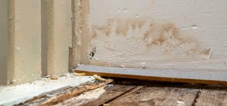 Klachten van bewoners Arnhemse 'horrorhuizen' gebundeld: 'Een rat beet een baby die in de wieg lag te slapen'
