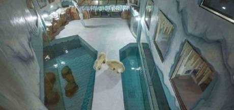 Chinees 'ijsberen-hotel' meteen volgeboekt, maar ook onder vuur