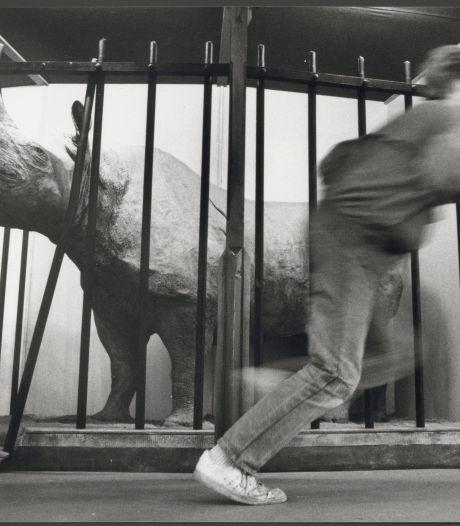 1967: neushoorn Farou breekt los, en moet het met de dood bekopen