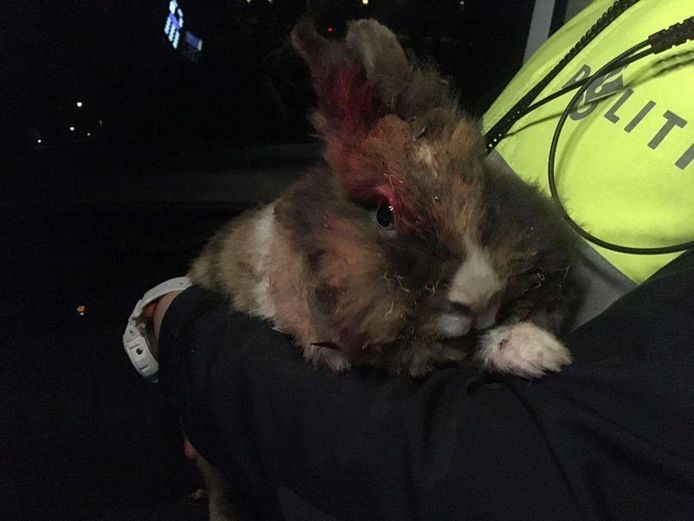 Een voorbeeld van dierenmishandeling: dit konijn werd afgelopen zomer in brand gestoken in Apeldoorn.