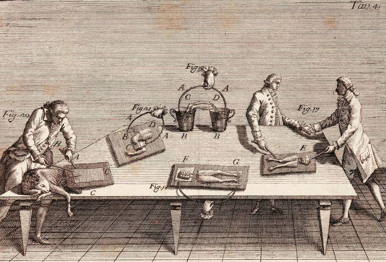 Op deze tekening uit 1791 testen wetenschappers het effect van elektrische signalen op spieren. Ondanks dat dergelijke experimenten eeuwenoud zijn, is bio-elektronica een vrij nieuw vakgebied. Beeld getty