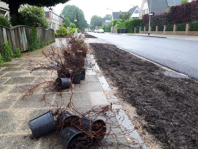 Geen bomen maar perkjes met struikgewas legt de gemeente Oss aan in de Adelaar.