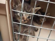 Poezen en 13 kittens uit vervuilde woning in Breda gehaald na meldingen