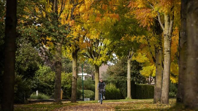 Bomen in Dilbeek extra beschermd met bomenbeleidsplan