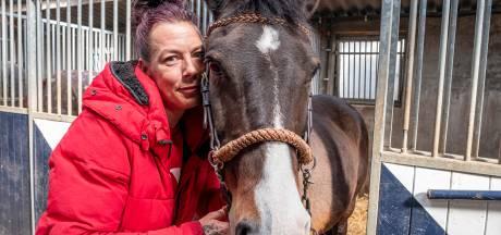 Verzet tegen chippen van oude paarden: 'Laat Pepper toch met rust'