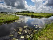 'Provincie moet meer ballen tonen met het versterken van de natuur'