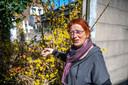 Rijo Meulbroek ontdekt iets moois bij een verlaten tuin: een bloeiende forsythia, echt iets waar vogels blij mee zijn.
