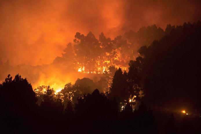 De harde wind wakkert de bosbranden op Gran Canaria extra aan.