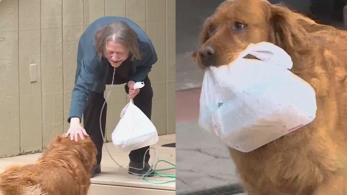 Samen tegen corona: behulpzame hond brengt boodschappen naar zieke buurvrouw