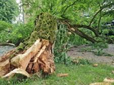 Verrotte boom valt om in Hengelo, auto beschadigd