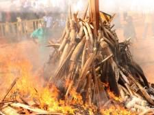 Kenia verbrandt 105 ton ivoor in strijd tegen stropers