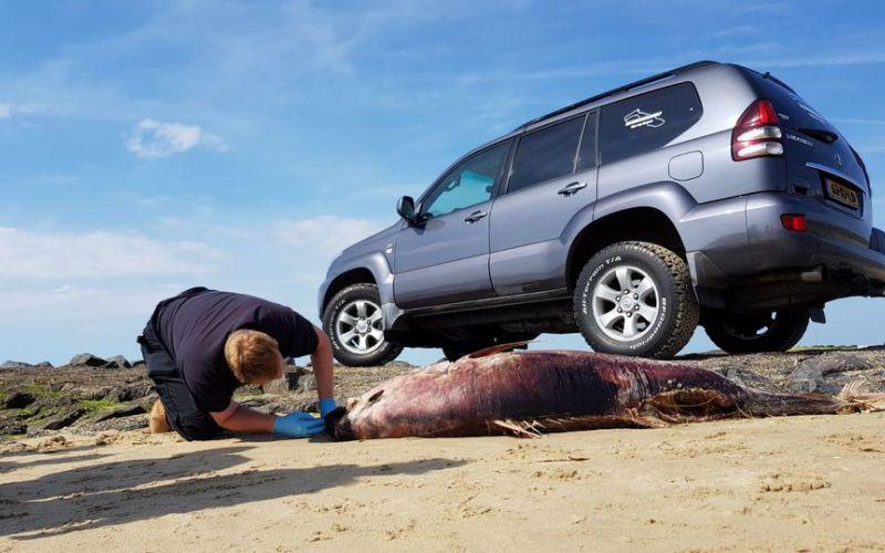 De dode tonijn wordt geborgen