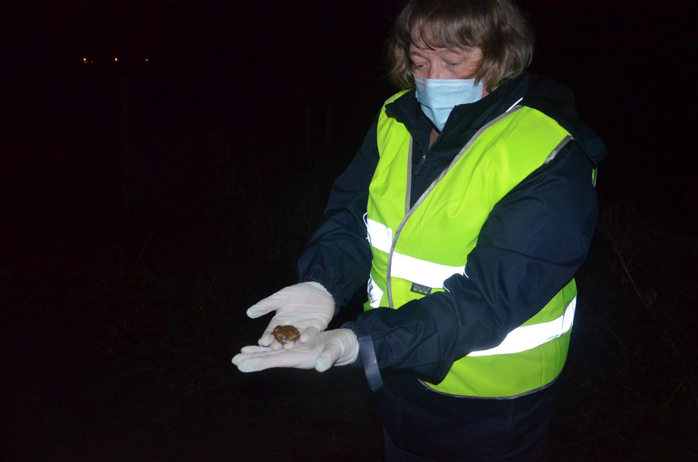 Tijdens de paddenoverzetactie van Natuurpunt werden er heel wat padden overgezet, onder meer op de Denderhoutembaan in Ninove, aan de grens met Denderhoutem. Vrijwilliger Christine met één van de padden.