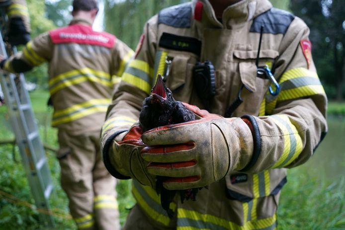 De brandweer heeft dinsdagavond na een ruim uur inspanning een vogel uit een boom gered in Zevenaar
