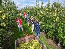 Zonder ondergrondse wateropslag kan fruitteler Jan Rijk wel stoppen met boeren