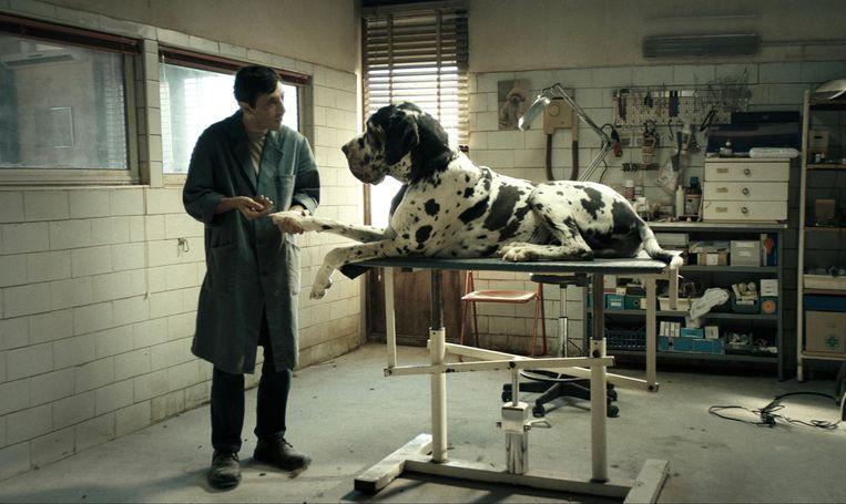 Marcello Fonte als hondenkapper in 'Dogman' Beeld Cinéart