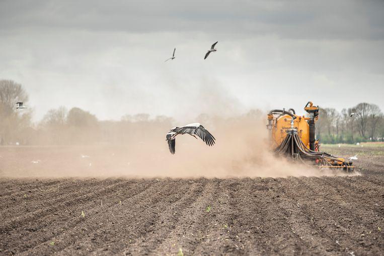 In een droog stuk bouwgrond wordt mest geïnjecteerd.  Beeld Harry Cock / de Volkskrant