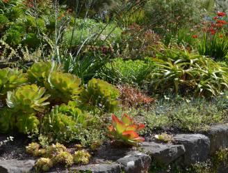 De plant waar je bijna niets mis kan doen: dit zijn de beste vetplanten voor buitenshuis