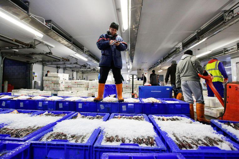De visafslag in het Schotse Peterhead, de zeevishoofdstad van Europa. Er wonen zo'n 19.000 mensen.  Beeld  Matthew Lloyd / Getty